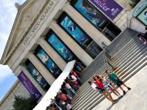 How-to Enjoy Chicago's Shedd Aquarium in 5 Easy Steps!