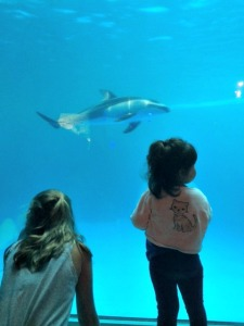 How To Have An Amazing Day At Shedd Aquarium In Chicago In